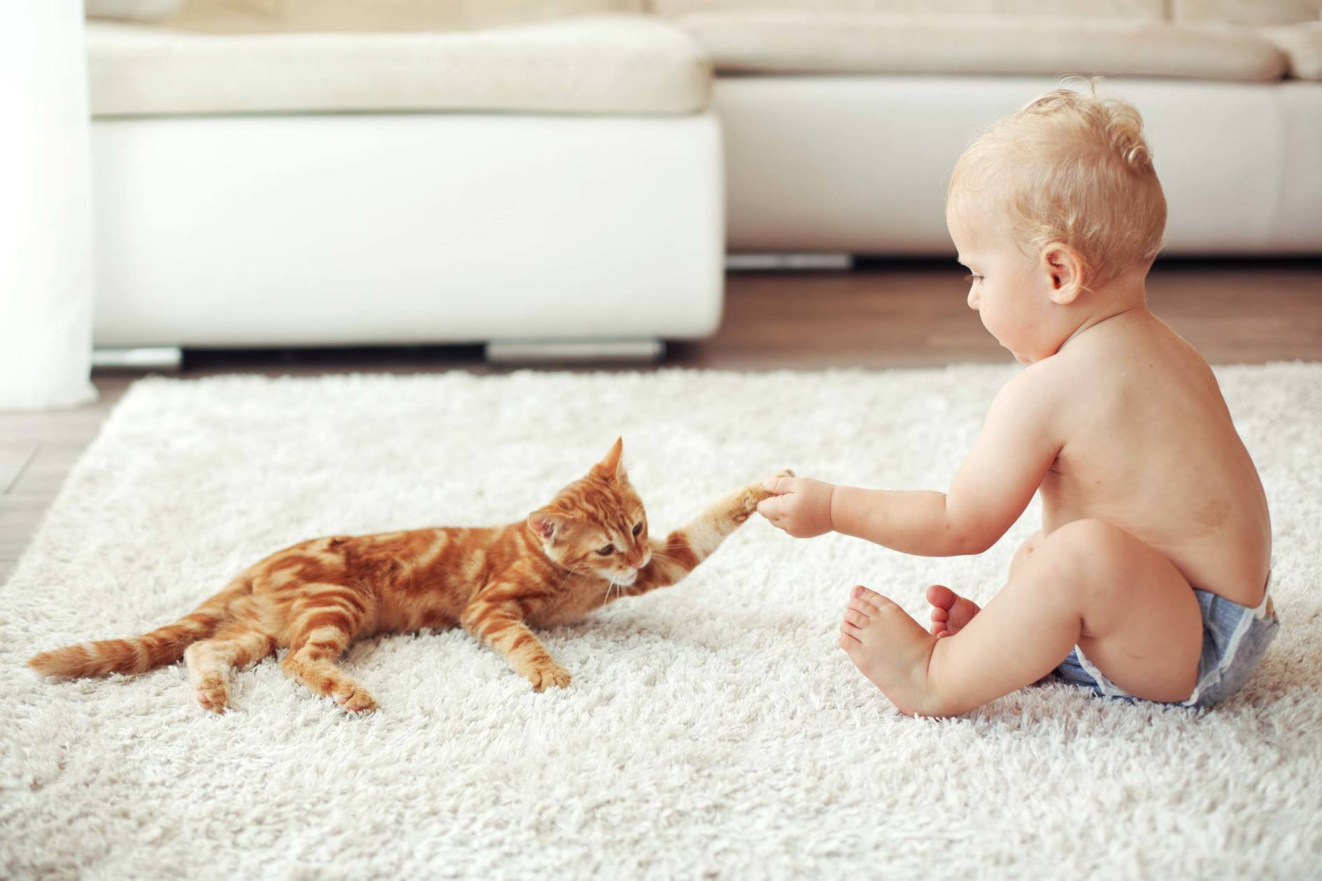 baby and cat on the living room carpet